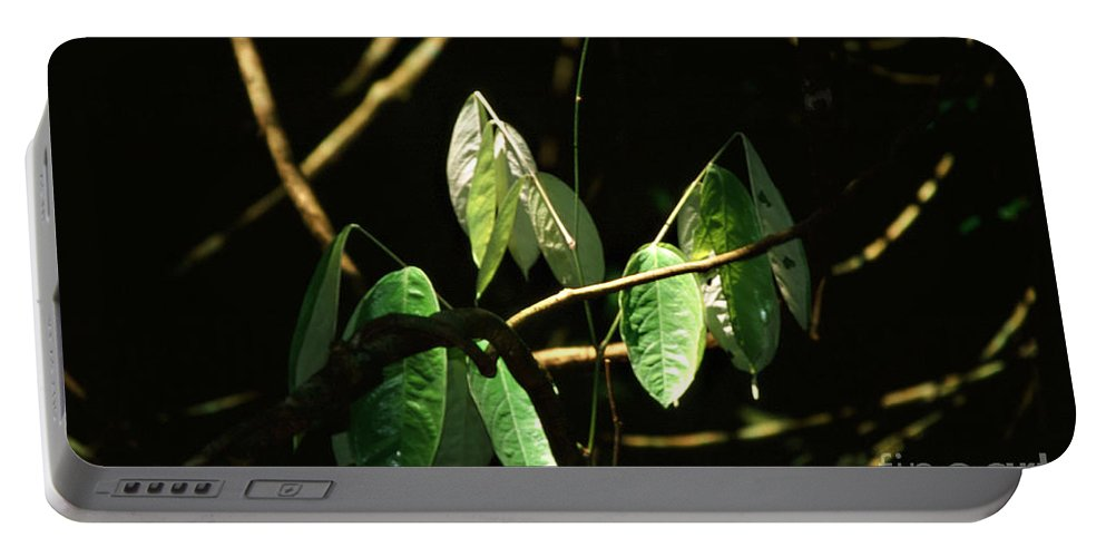 Leaves Portable Battery Charger featuring the photograph Sunlit Leaves by Kathy McClure