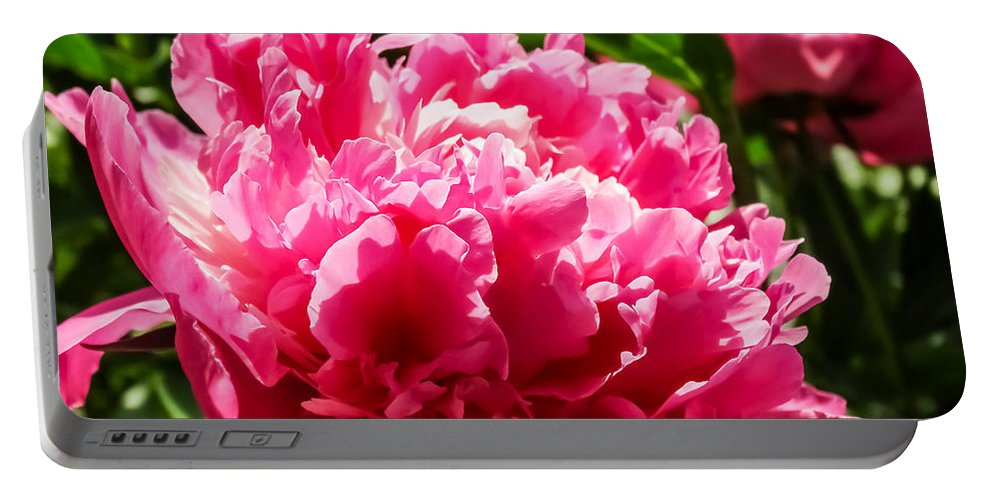 Sunlit Pink Peony Portable Battery Charger featuring the photograph Sunlit Pink Peony by Cynthia Woods