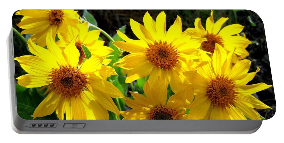 Wildflowers Portable Battery Charger featuring the photograph Sunlit Wild Sunflowers by Will Borden