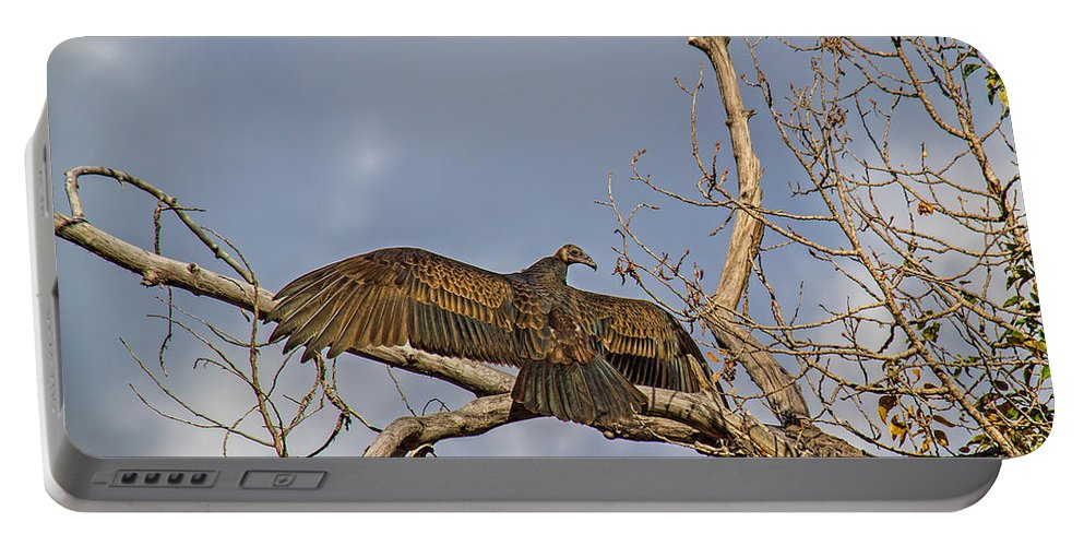 Wild Life Portable Battery Charger featuring the photograph Sunning by Alana Thrower