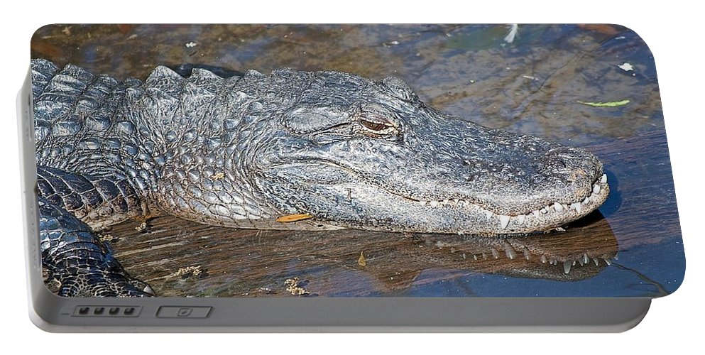 Animal Portable Battery Charger featuring the photograph Sunning Alligator 1 by Kenneth Albin