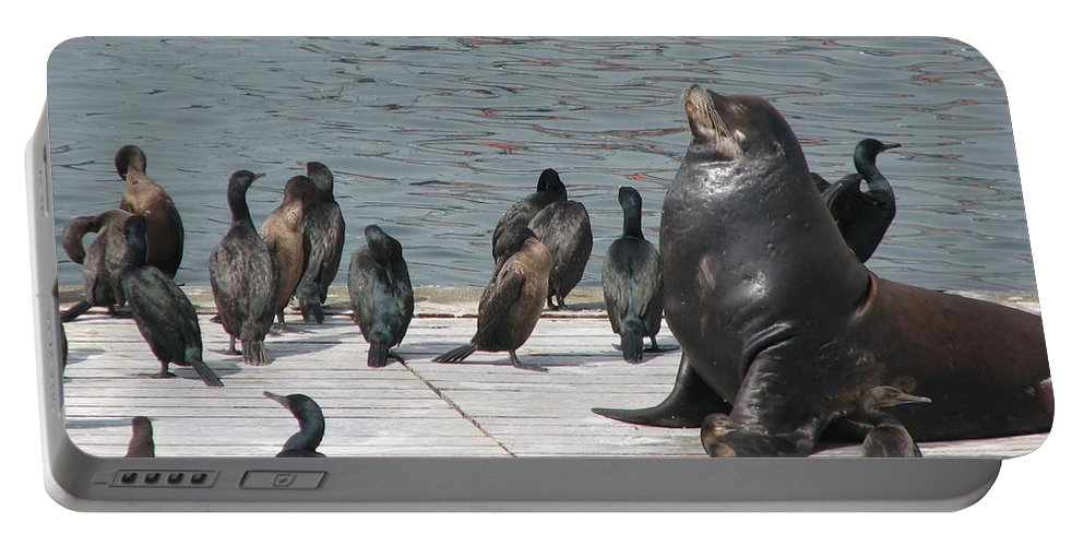 Sea Lion Portable Battery Charger featuring the photograph Sunning by Sandra Bourret
