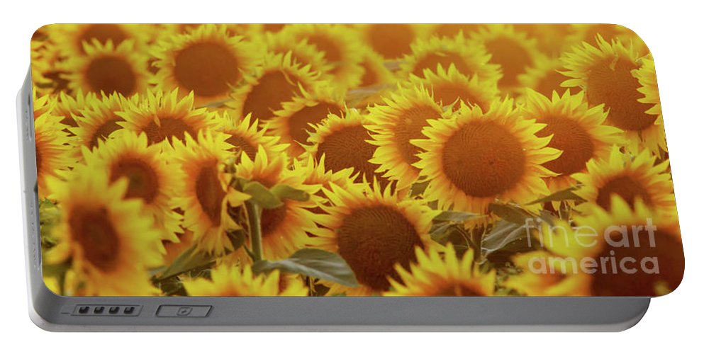 Sunflower Portable Battery Charger featuring the photograph Sunny Sunflower Sunset by Kevin Anderson