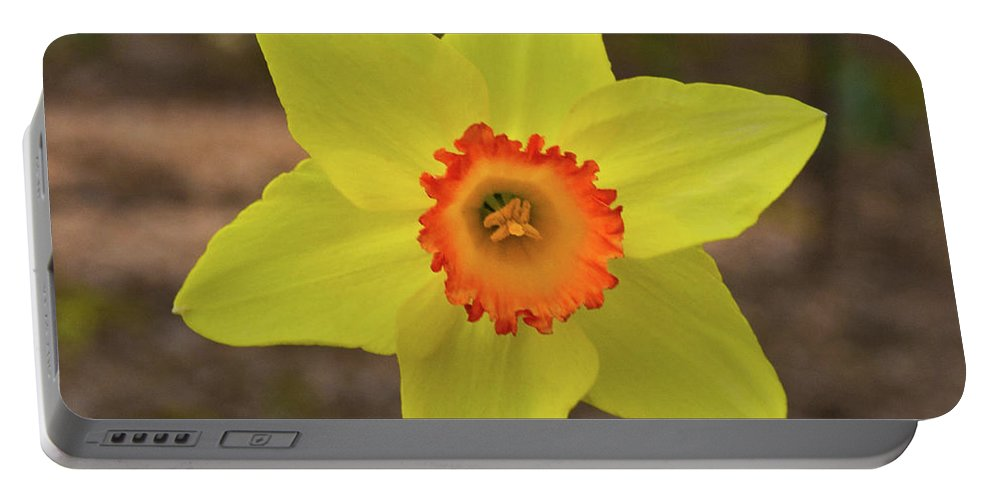 Sunrise Portable Battery Charger featuring the photograph Sunrise Daffodil by Douglas Barnett