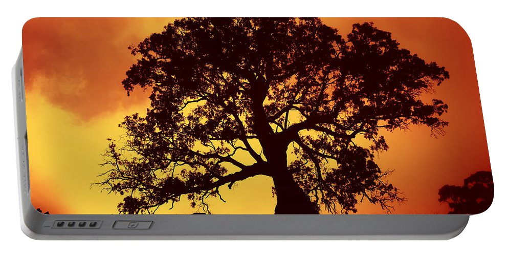 Gum Tree Portable Battery Charger featuring the photograph Sunrise Gum by Mike Dawson