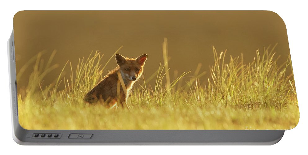 Alert Portable Battery Charger featuring the photograph Sunset Fox by Menno Schaefer