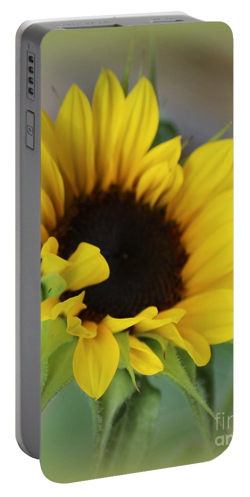Sunflower Portable Battery Charger featuring the photograph Sunshine Beauty - Sunflower by Dora Sofia Caputo Photographic Design and Fine Art