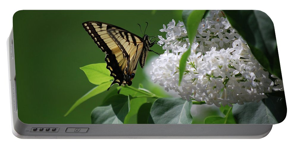 Swallowtail Portable Battery Charger featuring the photograph Swallowtail Beauty by Lori Tambakis