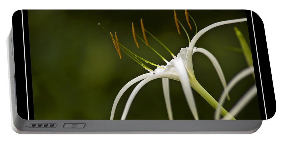 Swamp Lily Portable Battery Charger featuring the photograph Swamp Lily by Carolyn Marshall