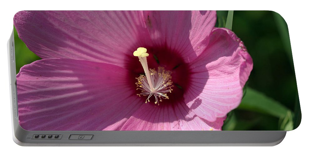 Aroma Portable Battery Charger featuring the photograph Swamp Rose Mallow by Jack R Perry