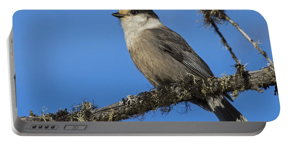 Gray Jay Portable Battery Charger featuring the photograph Swampy Perch by Tony Beck