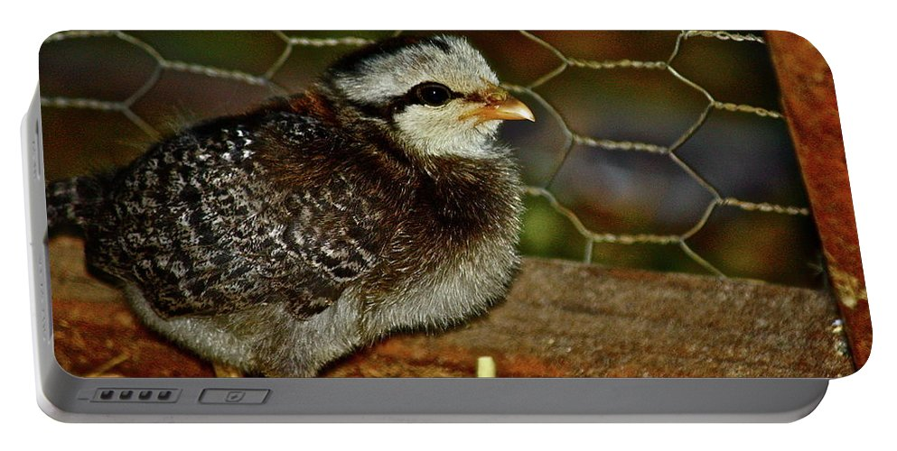 Fowl Portable Battery Charger featuring the photograph Sweet Baby by Diana Hatcher