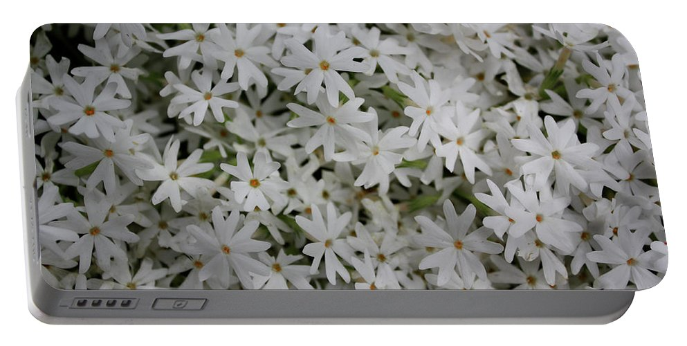 Flowers Portable Battery Charger featuring the photograph Sweet Stars by Cheryl O'Neil