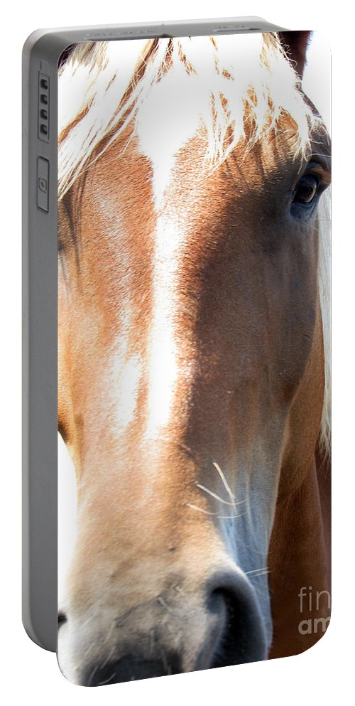 Horse Portable Battery Charger featuring the photograph Sweetie by Amanda Barcon