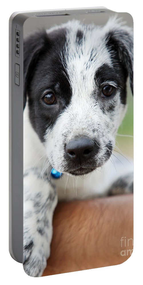 Puppy Portable Battery Charger featuring the photograph Sweetness by Amanda Barcon