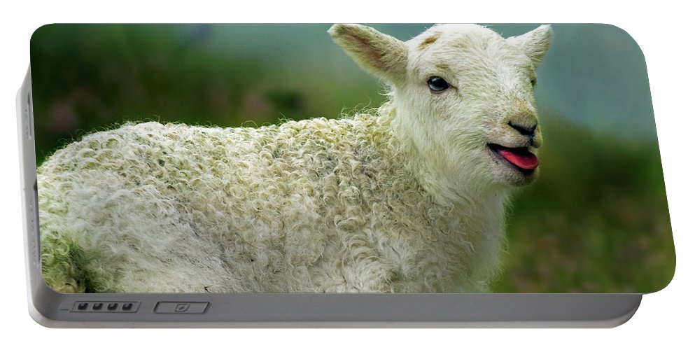 Lamb Portable Battery Charger featuring the photograph Swet Little Lamb by Angel Ciesniarska