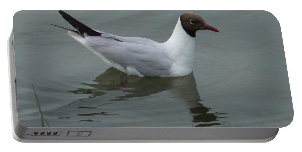 Bird Portable Battery Charger featuring the photograph Swimming Gull by Andrew Ford