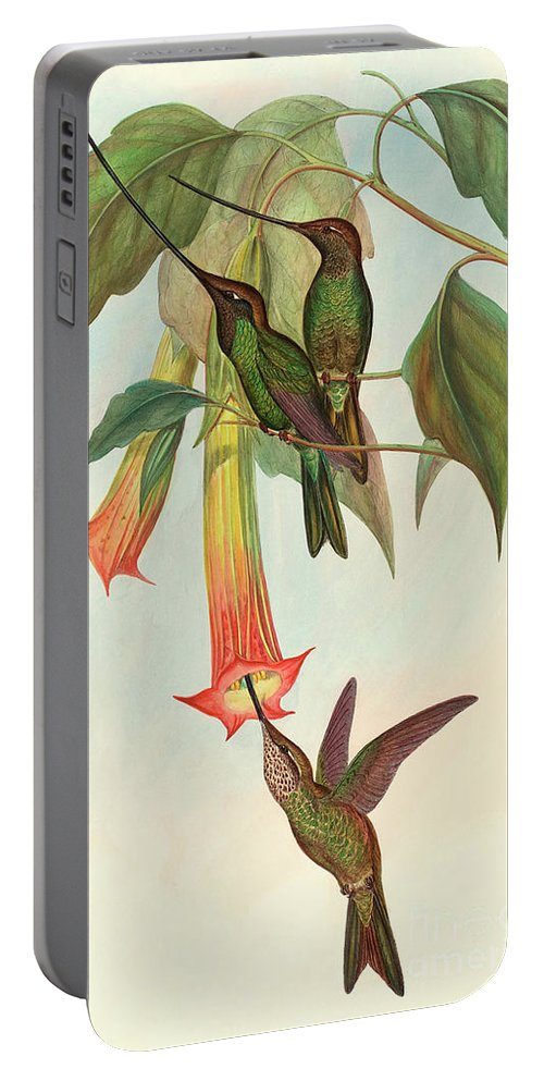 Hummingbird Portable Battery Charger featuring the painting Sword Billed Hummingbird by John Gould