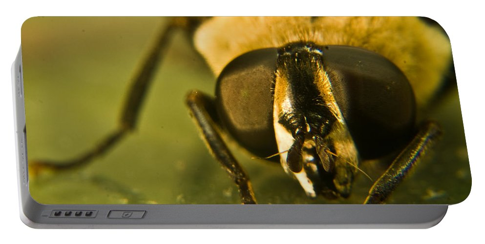 Syrphid Portable Battery Charger featuring the photograph Syrphid Eyes by Douglas Barnett