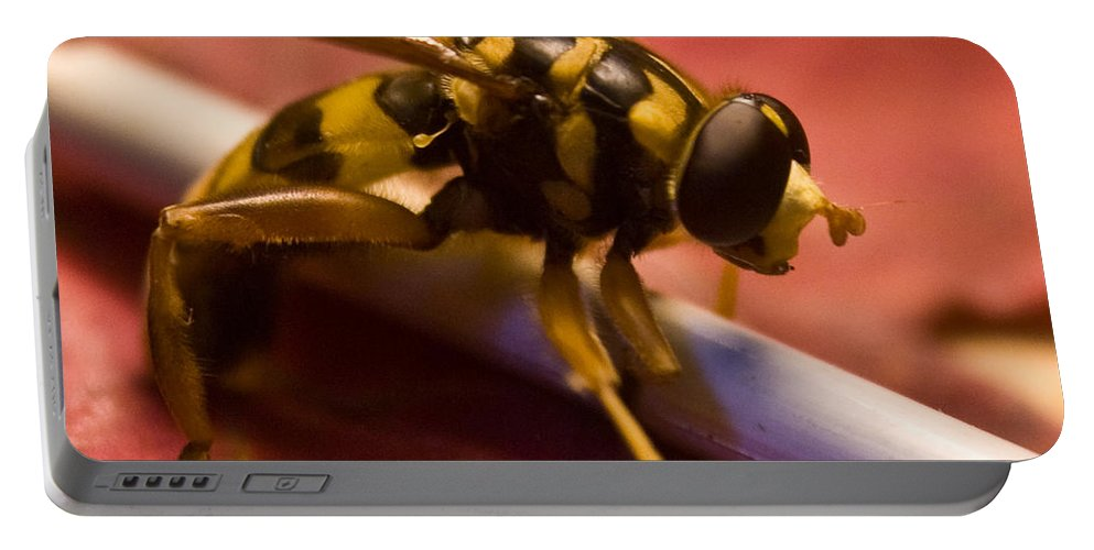 Insect Portable Battery Charger featuring the photograph Syrphid Fly Poised by Douglas Barnett
