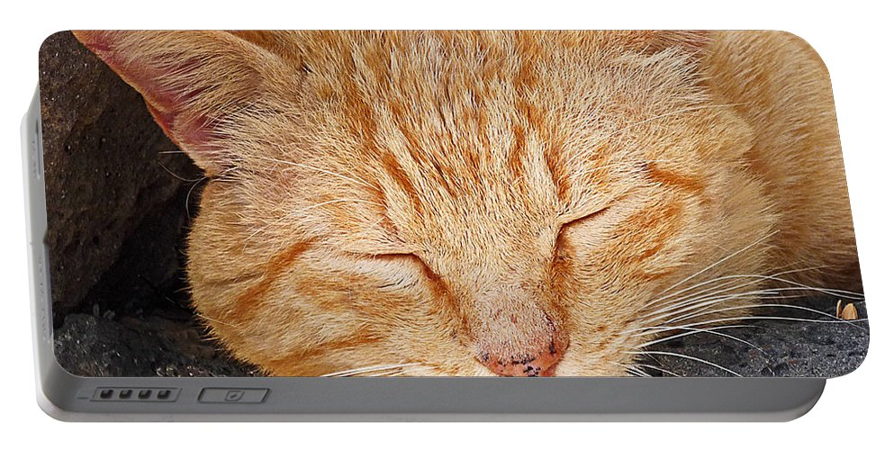 Cat Portable Battery Charger featuring the photograph Tabby by Charles Stuart