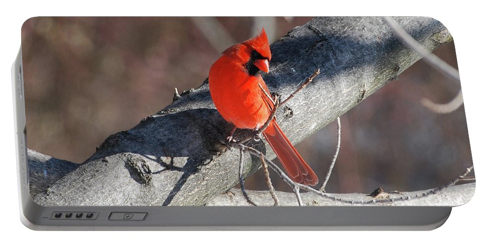 Cardinal Portable Battery Charger featuring the photograph Take My Picture by Lori Tambakis