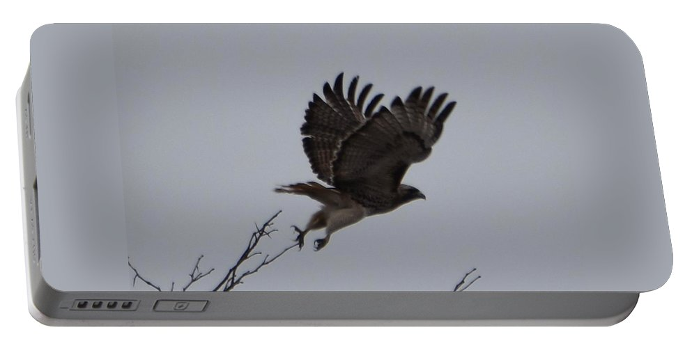 Hawk Portable Battery Charger featuring the photograph Takeoff by Linda Benoit