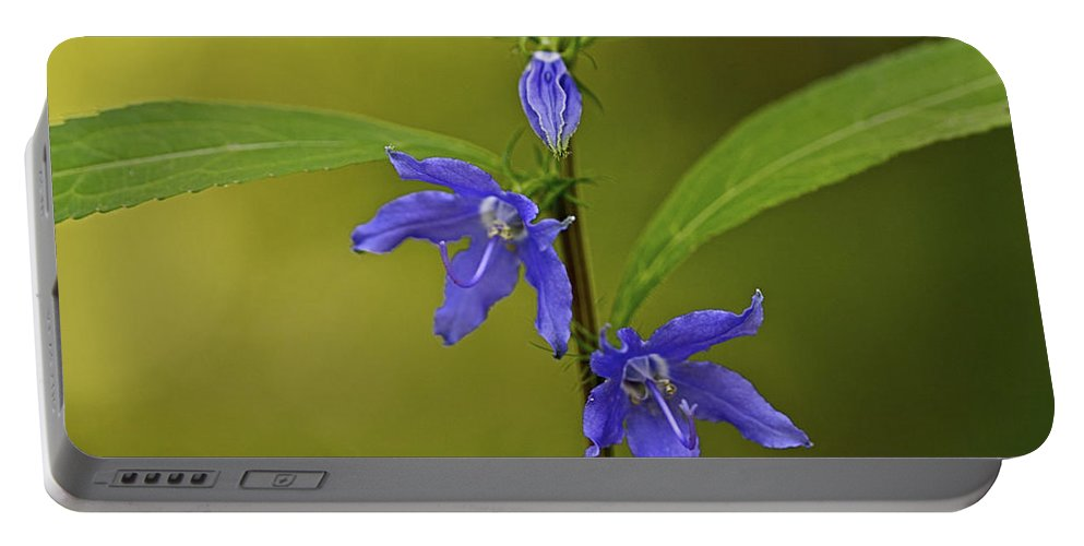 Abstract Portable Battery Charger featuring the photograph Tall Bellflower by Jack R Perry