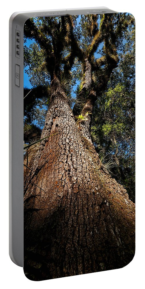 Tree Portable Battery Charger featuring the photograph Tall Oak by Christopher Holmes