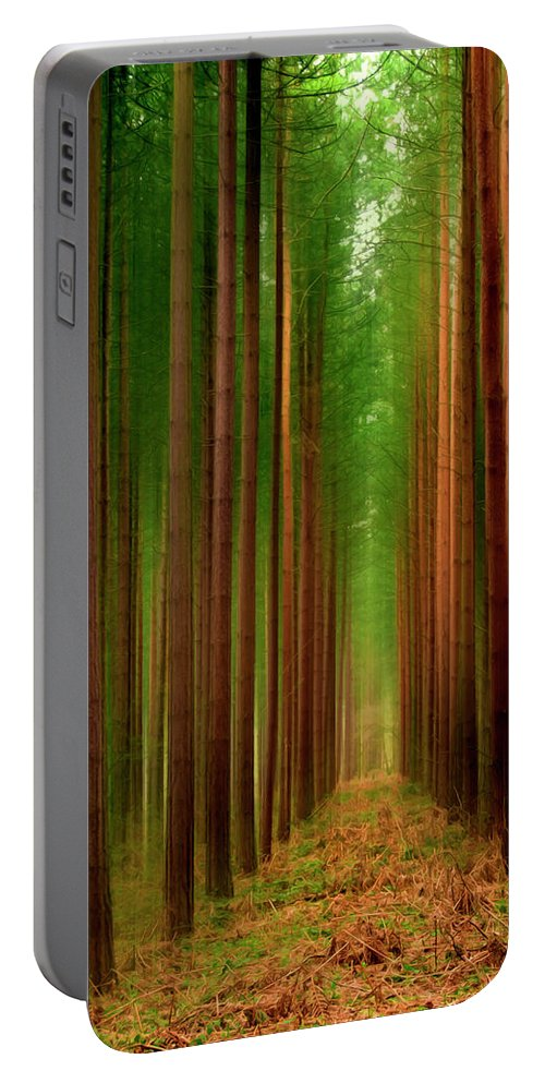 Forest Portable Battery Charger featuring the photograph Tall Trees by Svetlana Sewell