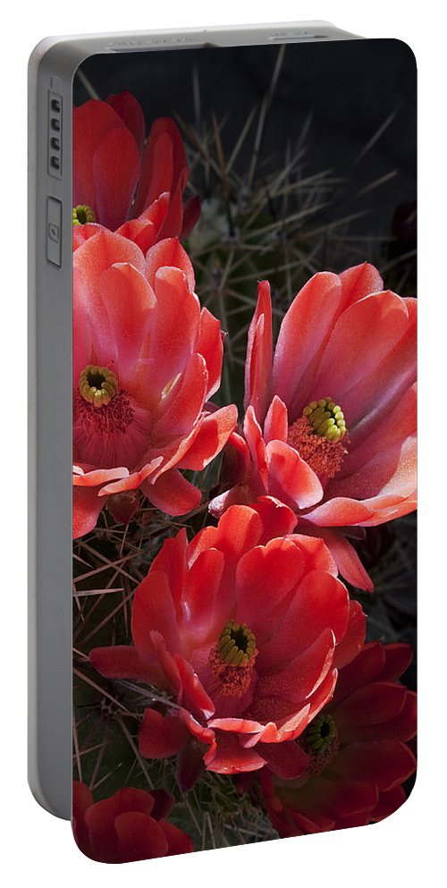 Blossoms Portable Battery Charger featuring the photograph Tangerine Cactus Flower by Phyllis Denton