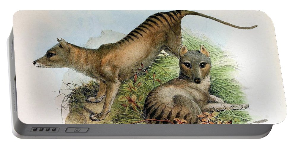 Thylacine Portable Battery Charger featuring the photograph Tasmanian Tiger, Extinct Species by Biodiversity Heritage Library