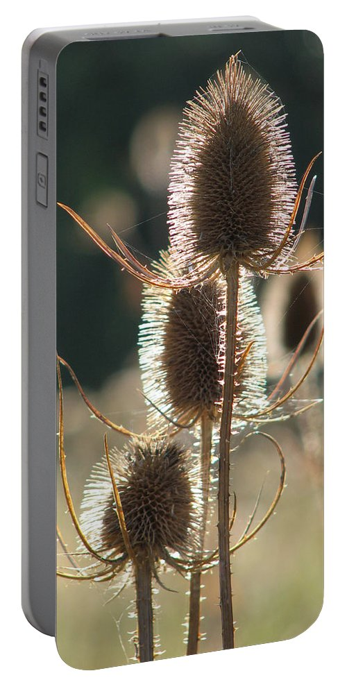 Teasle Portable Battery Charger featuring the photograph Teasle In Morning Light by Bob Kemp
