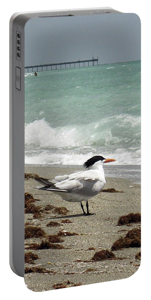 Florida Portable Battery Charger featuring the photograph Tern's View Gp by Chris Andruskiewicz