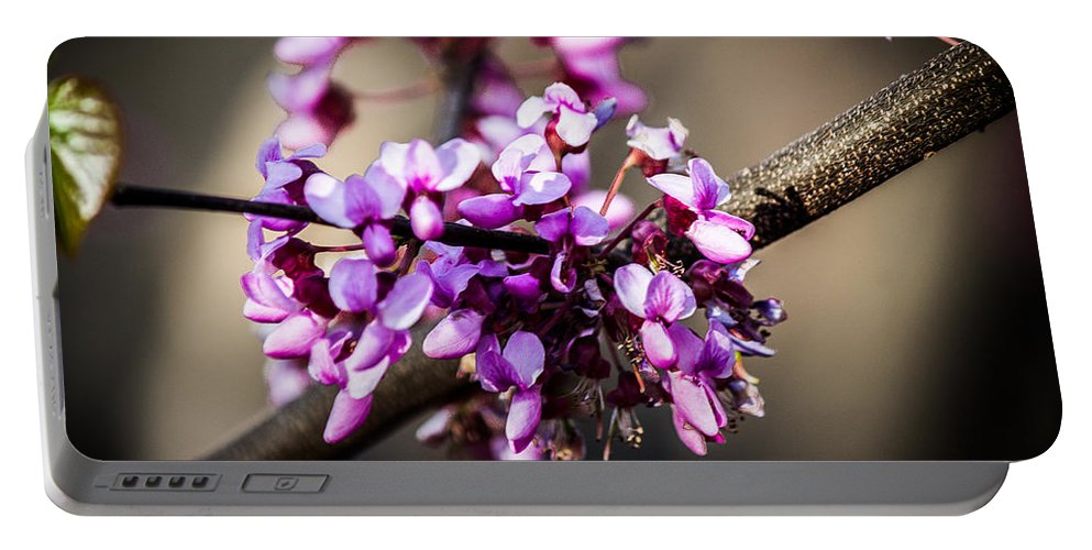 Texas Portable Battery Charger featuring the photograph Texas Redbud by Anthony Evans
