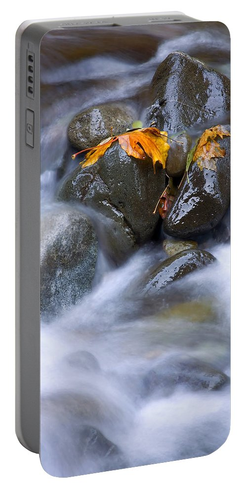 Maple Portable Battery Charger featuring the photograph Textures Of Autumn by Mike Dawson