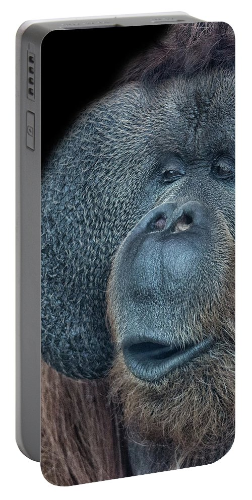 Orangutan Portable Battery Charger featuring the photograph That Oooh Moment by Martin Newman