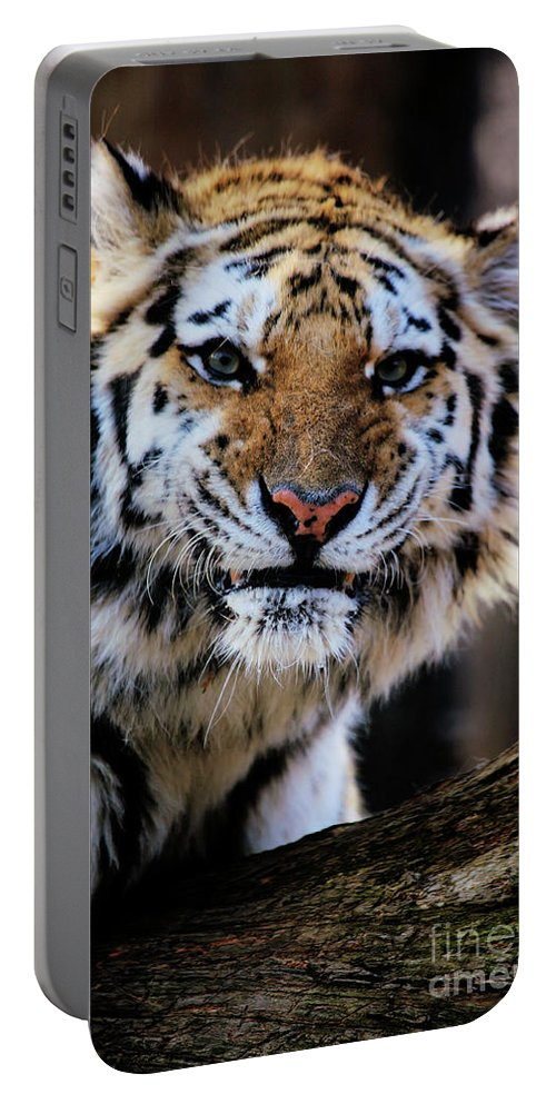 Tiger Portable Battery Charger featuring the photograph That Tiger Look by Karol Livote