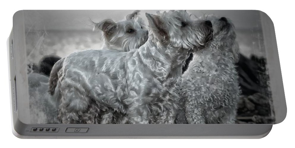Dog Portable Battery Charger featuring the photograph The 3 Amigos by Clare Bevan
