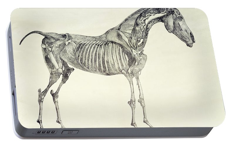 The Anatomy Of The Horse Portable Battery Charger For Sale By George