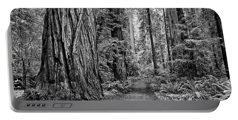 Redwoods Portable Battery Charger featuring the photograph The Beautiful And Massive Giant Redwoods by Jamie Pham