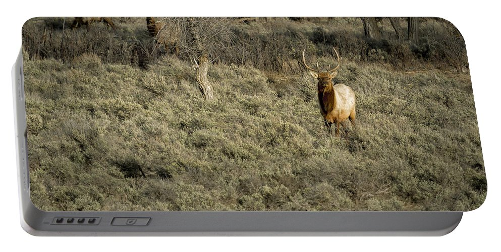 Elk Portable Battery Charger featuring the photograph The Bull Elk by Belinda Greb