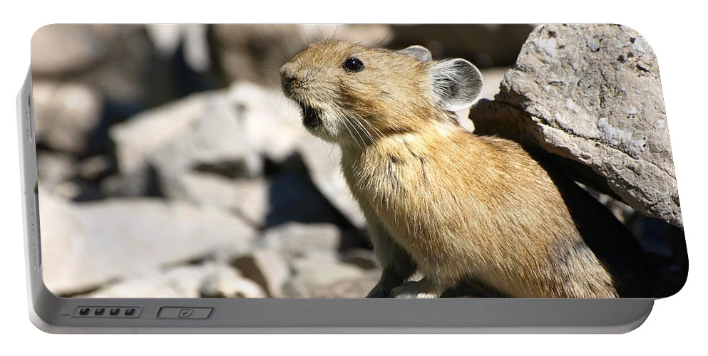 Animals Portable Battery Charger featuring the photograph The Call Of The Pika by DeeLon Merritt