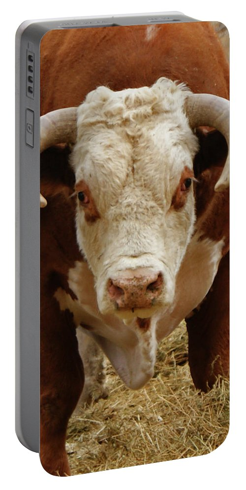 Bulls Portable Battery Charger featuring the photograph The Challenge by Ernie Echols