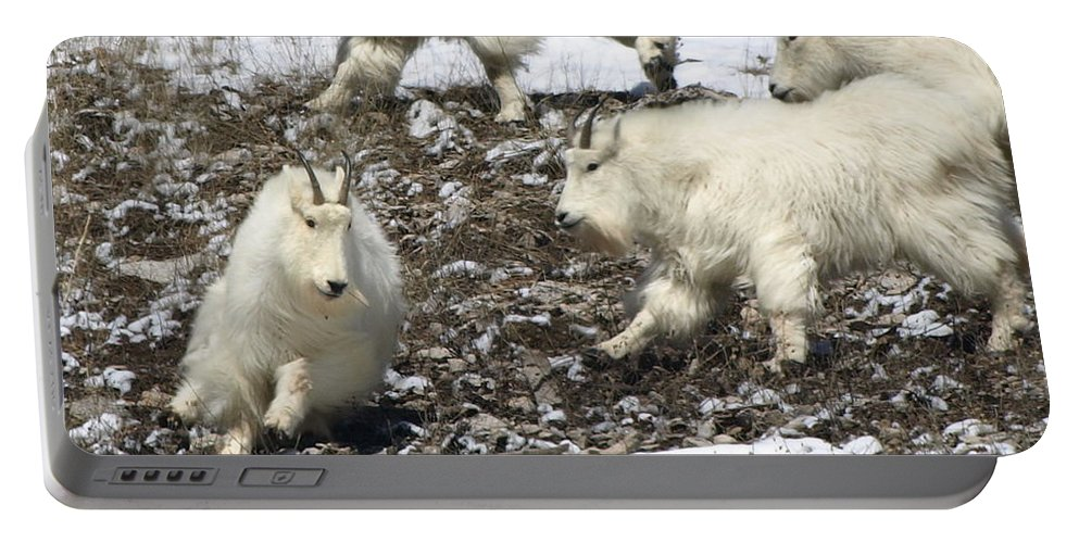 Animals Portable Battery Charger featuring the photograph The Chase by DeeLon Merritt