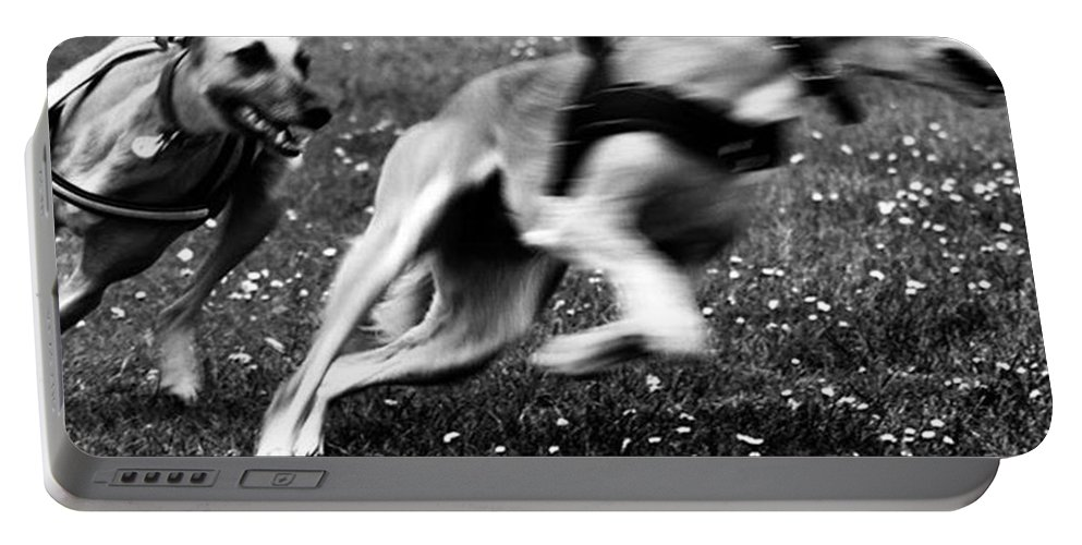 Persiangreyhound Portable Battery Charger featuring the photograph The Chasing Game. Ava Loves Being by John Edwards