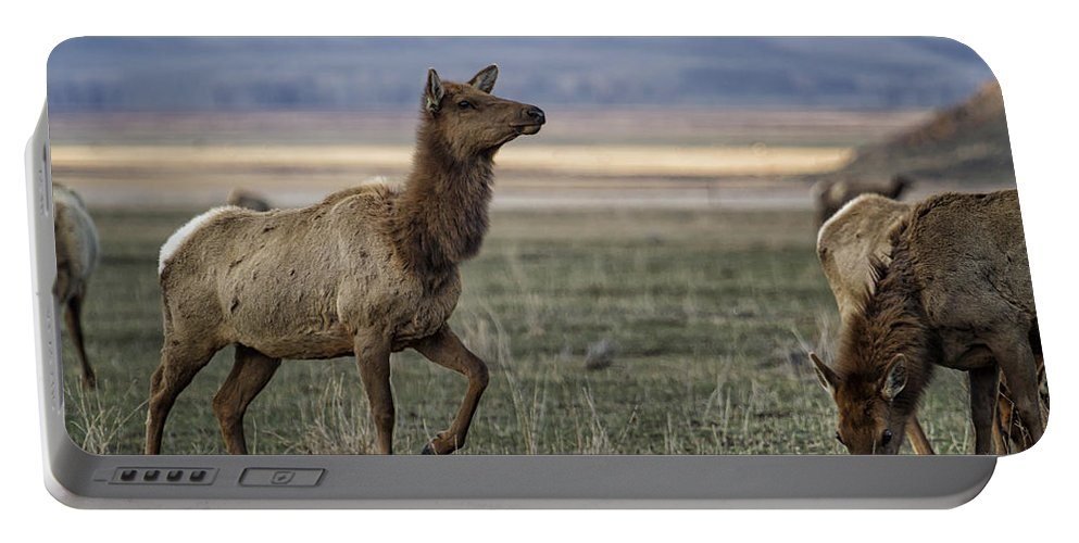 Elk Portable Battery Charger featuring the photograph The Cow Elk by Belinda Greb