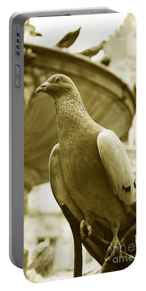 Dove Fountain Water Bird Birds White Gray Sepia Eye Architecture Water City Danzig Old Portable Battery Charger featuring the photograph The Dove by Steve K