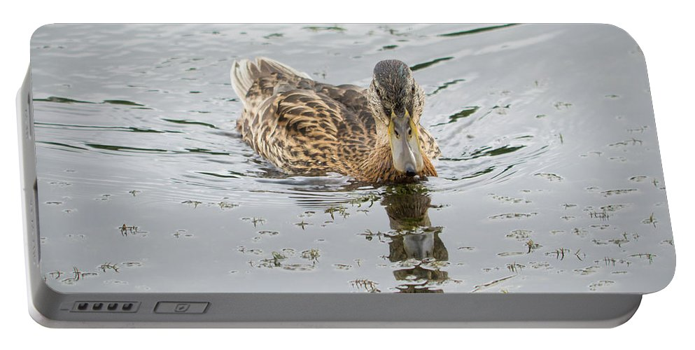 Duck Portable Battery Charger featuring the photograph The Duck by Konstantin Bibikov