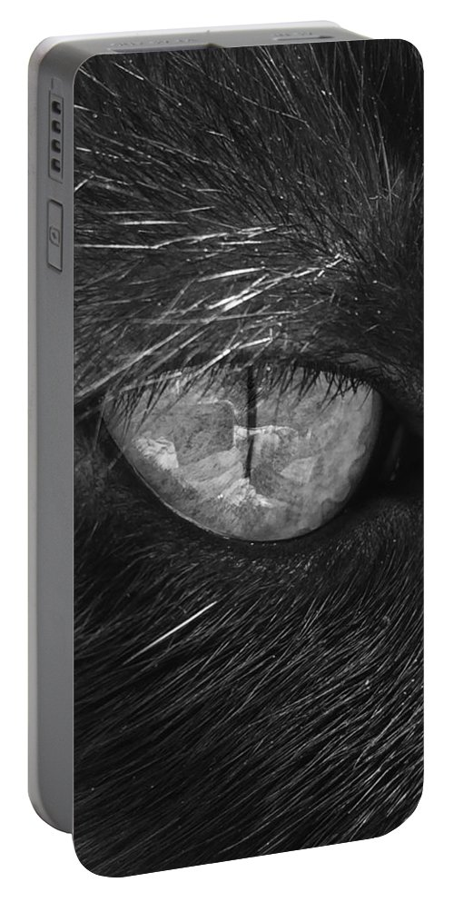 Cat Portable Battery Charger featuring the photograph The Eye by Lucy Hillier